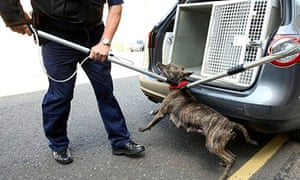 Police dog handlers with pit bull