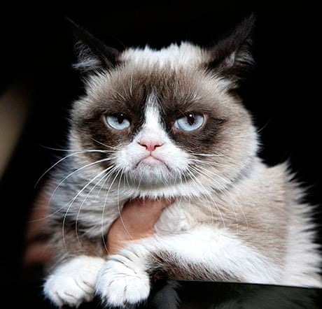Tardar Sauce  aka Grumpy Cat  won the lifetime achievement award at    Tardar Sauce