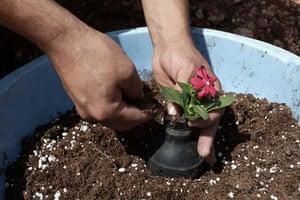 tear gas garden: A Palestinian man plants a flower in a tear gas canister