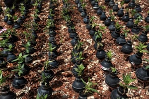 tear gas garden: Flower are seen planted in tear gas canisters
