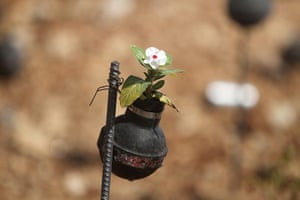 tear gas garden: A close up of a flower planted in a tear gas canister