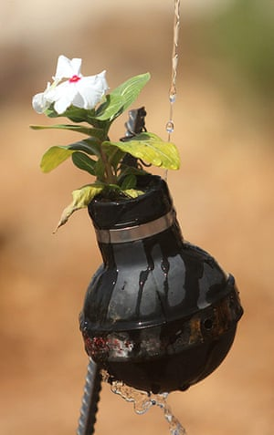 tear gas garden: A close up of a flower being watered