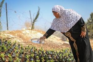 tear gas garden: A palestinian woman waters the plants