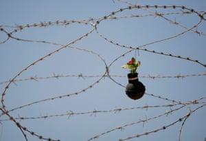 tear gas garden: Flower on razor wire