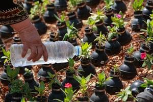 tear gas garden: Flowers in tear gas canisters