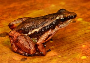 RAP in Suriname: Conservation International team discovered new species