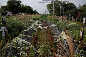 Fukushima: Wild flowers and other vegetation grow over train line in Namie