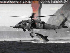 Photoshop Disasters: helicopter and Shark