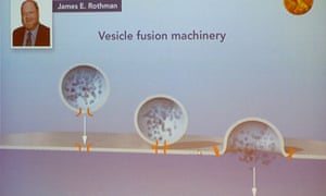 Graphic explaining vesicle transport during a press conference to announce the laureates of the 2013 Nobel Prize in Physiology or Medicine