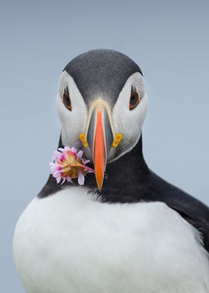 BirdLife South Africa: Oceans of Life photo competition 2013