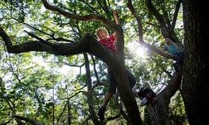 Children climbing trees