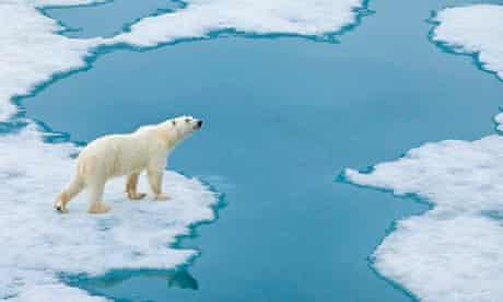 A polar bear approaches the Arctic Ocean's edge