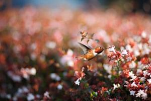 lonely planet: Hummingbird
