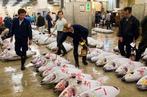 CBRE winners: 5am - Tuna at Tsukiji fish market