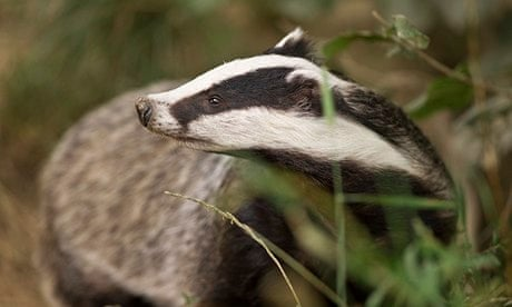 'Badgers are moving the goalposts' says Owen Paterson of cull