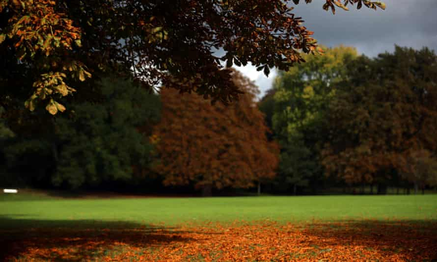 Trees begin to take on their autumn colours in The Royal Victoria Park on October 9, 2013 in Bath, England.