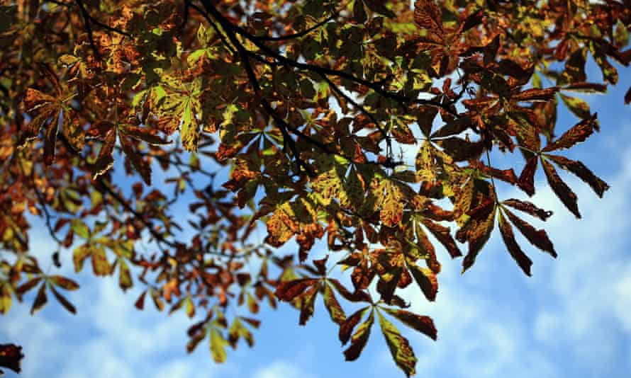 Leaves on a tree begin to take on their autumn colours in The Royal Victoria Park on October 9, 2013 in Bath, England.