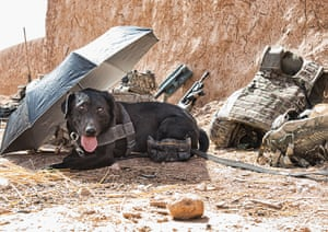 Army Photographic winners: 'Hot under the collar' by Cpl Jamie Peters RLC. A Military Working Dog (MWD