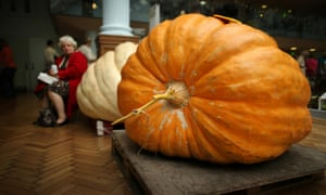 Giant pumpkins sit on pallets at the Royal Horticultural Society Harvest Festival show in London, UK.