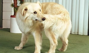 A dog holds on to its tail
