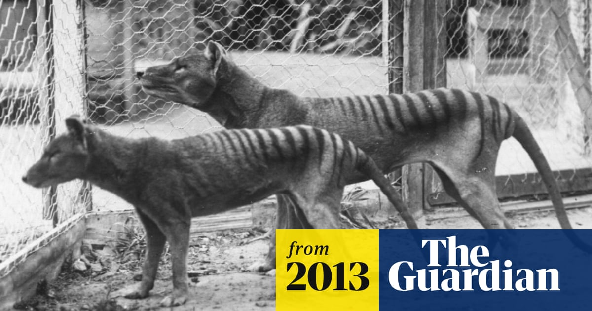 Zoologists Hunting Tasmanian Tiger Declare No Doubt Species Still Alive Wildlife The Guardian