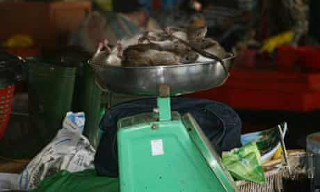 Rats for sale in the Cao Lanh Market