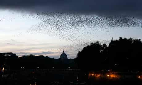 Starlings fill the sky in Rome