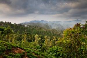 Nature reserves: Central Highlands of Sri Lanka World Heritage Site