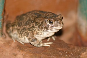 Nature reserves: A Leopard Toad