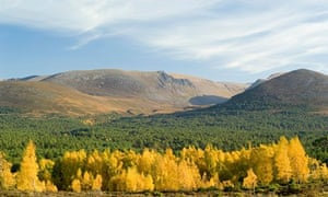 Rothiemurchus Forest and the Cairngorms in the Scottish highlands
