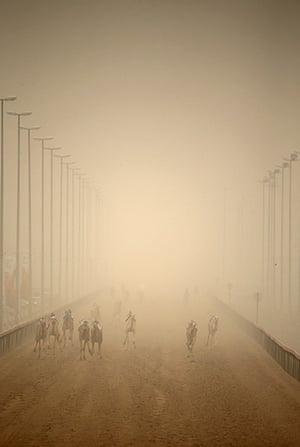 From the agencies camels: Camels race through a sandstorm