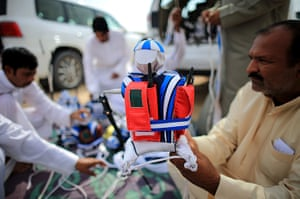 From the agencies camels: A handler prepares a robotic jockey ready to be strapped to a camel