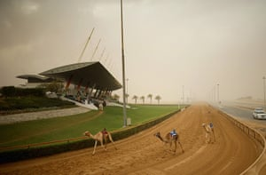 From the agencies camels: Camels finish their race at Dubai Camel Racing Club