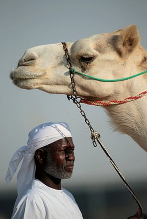 From the agencies camels:  A handler and his camel wait to race