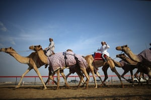From the agencies camels: A camel handler waves as he and his racing camels arrive