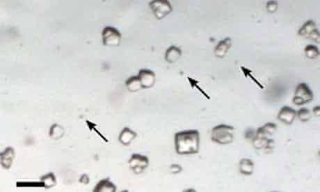 Micro protein crystals