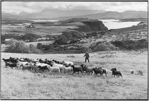 Elliott Erwitt: Sheep herding on moor