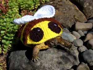 A bumble bee suit.