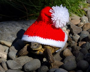 A Father Christmas hat.