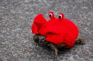 A crab suit.