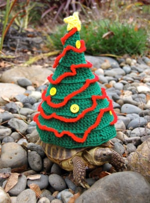 A Christmas tree suit.