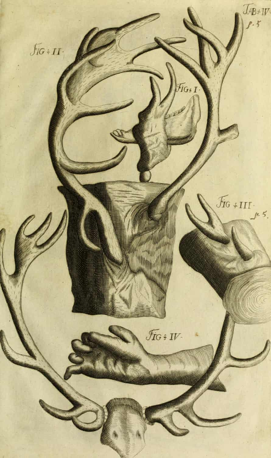 Worm's jawbone in 1698