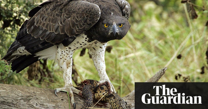 The red list of endangered species – in pictures ...