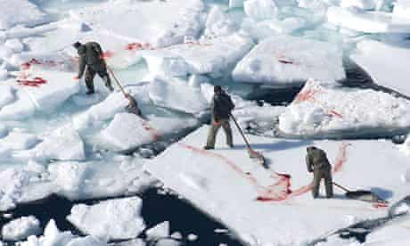 Seals after being clubbed to death during a hunt in Canada in 2008