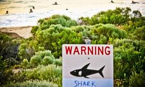A shark sighting sign near Prevelly Beach, Western Australia.