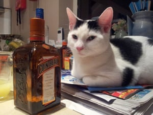 Cat and cointreau