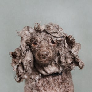 A wet dog portraits by photographer Sophie Gamand