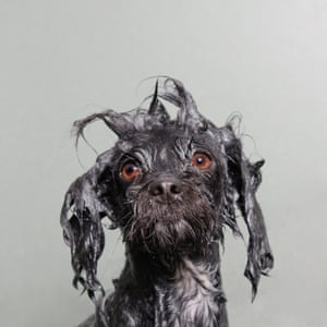 A wet dog portrait by photographer Sophie Gamand