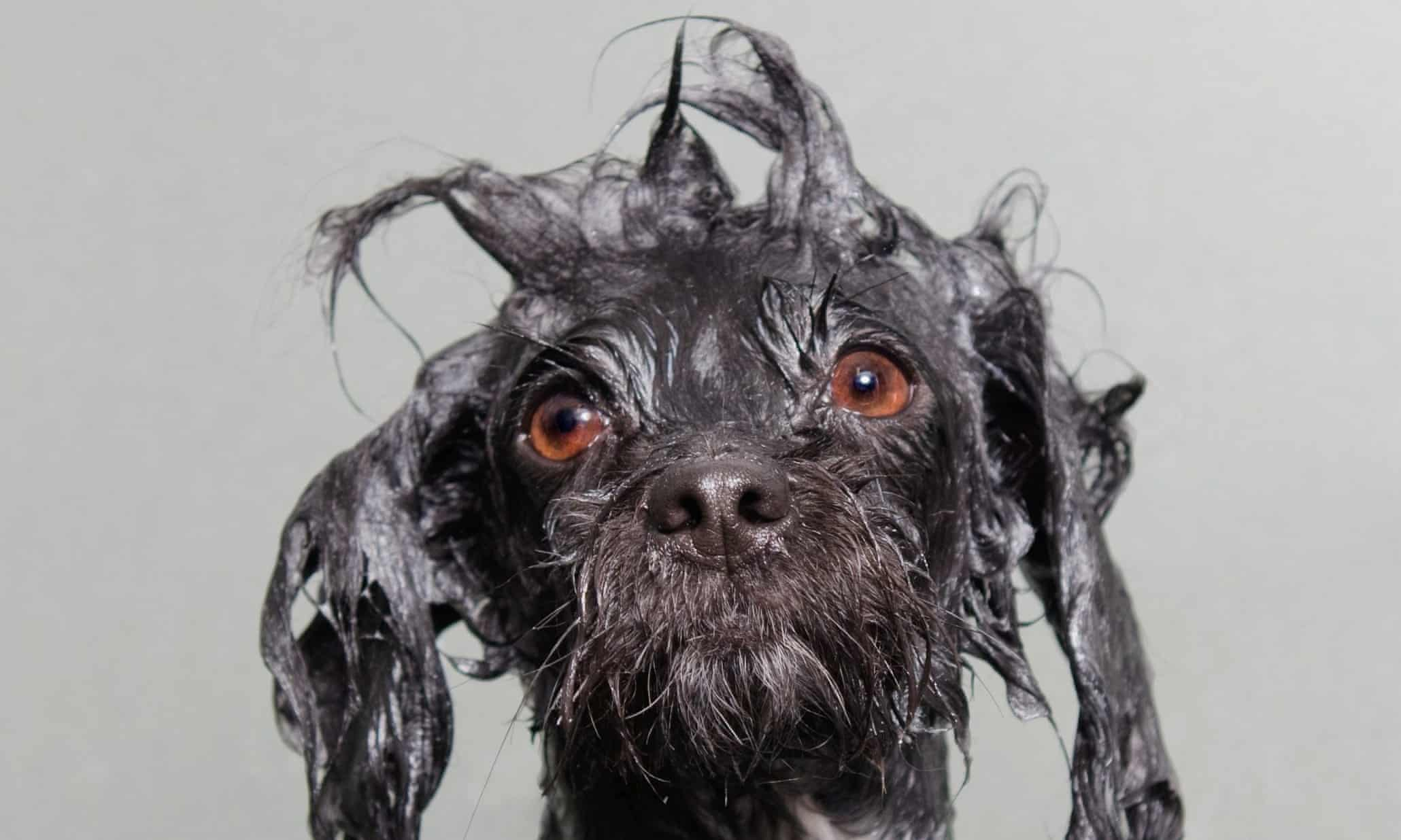 Wet Dog portraits - in pictures
