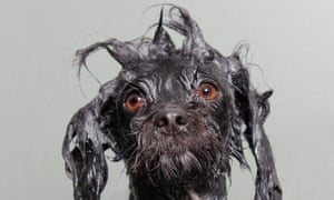 Wet Dog portraits - in pictures   Life and style   The Guardian